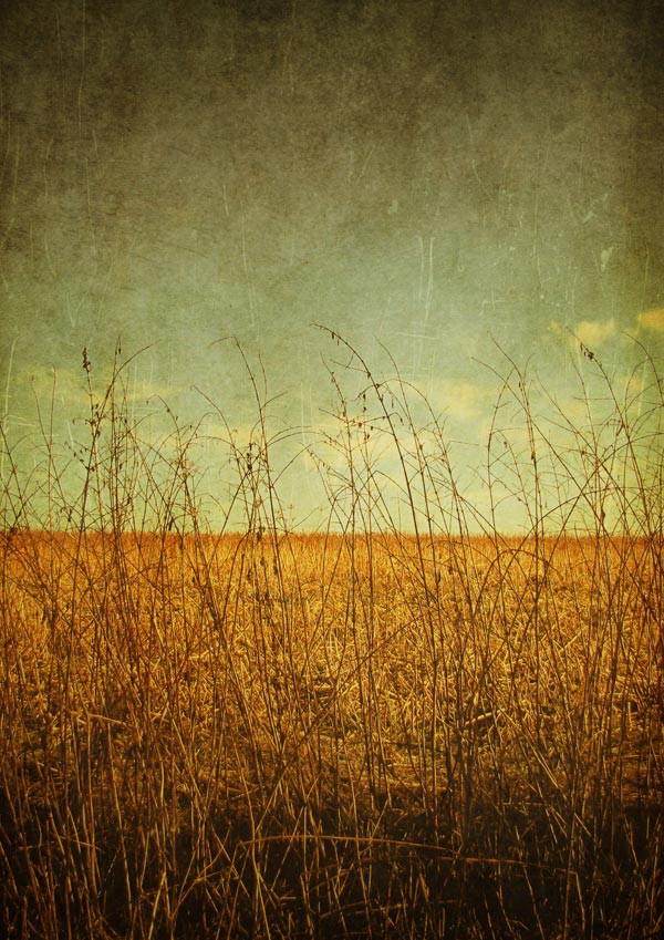 grunge nature art wallpapers - photo #1